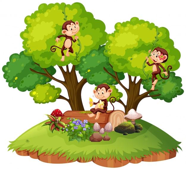 Macaco na natureza isolada