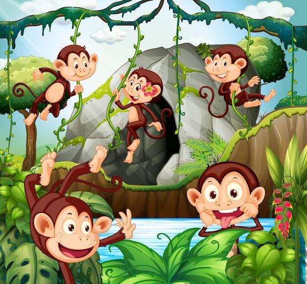Macaco pendurado na videira na floresta