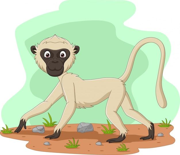 Macaco vervet dos desenhos animados no campo