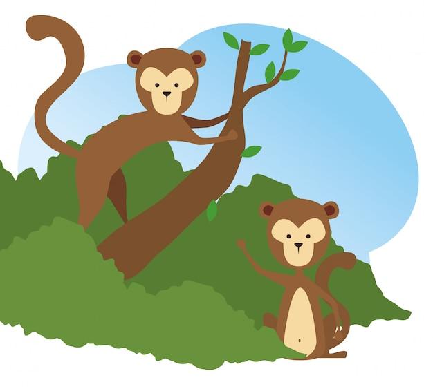 Macacos animais selvagens na reserva de galho de árvore