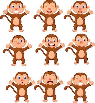 Macacos bonitos em várias expressões