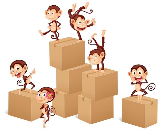 Macacos brincando com caixas