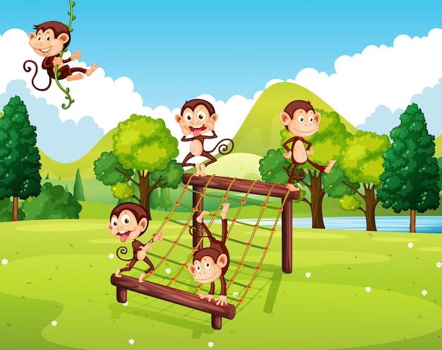 Macacos brincando na estação de escalada