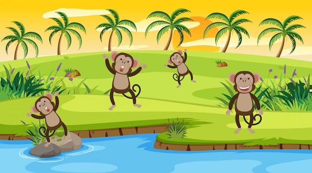 Macacos de cena pelo rio