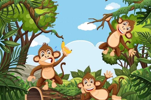 Macacos engraçados na cena da selva