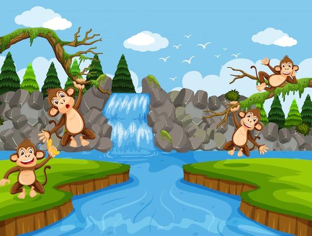 Macacos fofos na cena da selva