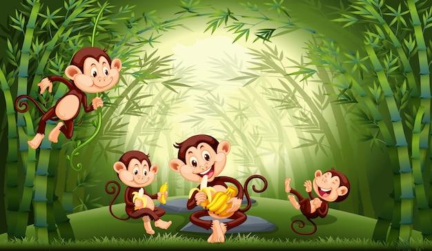 Macacos na floresta de bambu