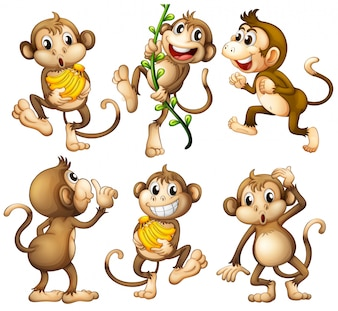 Macacos selvagens brincalhões