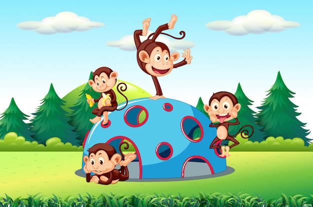 Macacos, tocando, ligado, pátio recreio