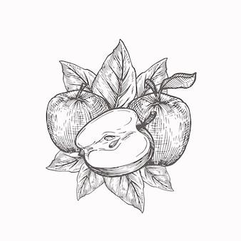 Maçãs com folhas. ilustração vetorial desenhada à mão.
