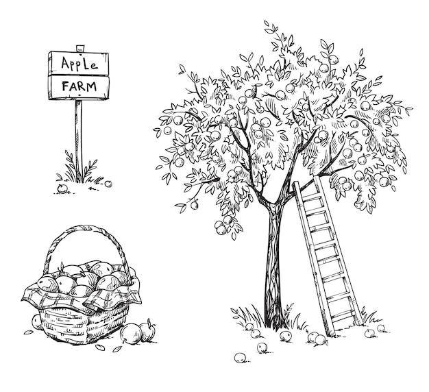 Macieira com uma escada e uma cesta de maçãs maduras, ilustração vetorial de fazenda de maçã