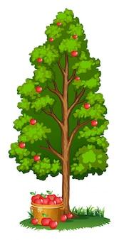 Macieiras vermelhas e maçãs na cesta