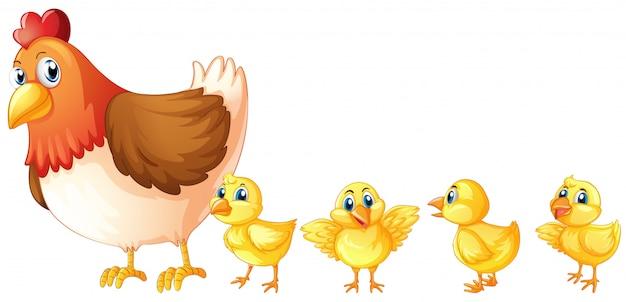 Mãe galinha e quatro filhotes
