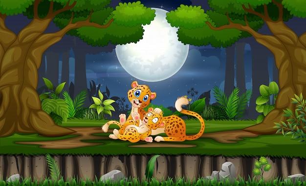 Mãe leopardo com seu filhote brincando à noite