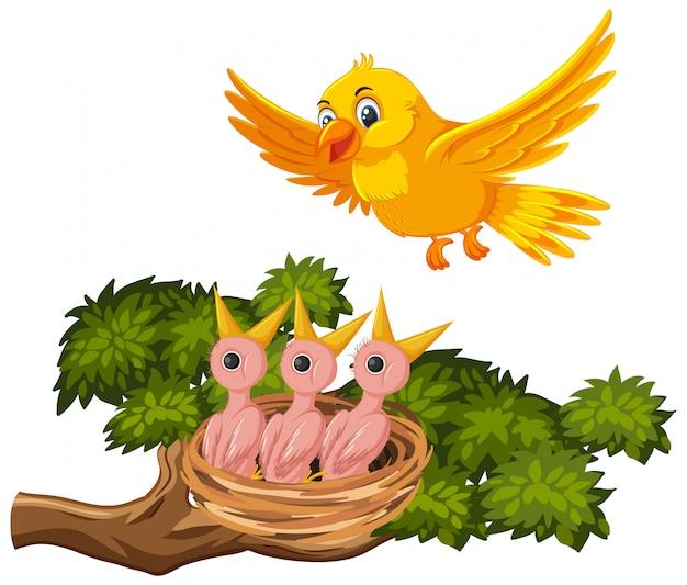Mãe pássaro alimentando filhotes