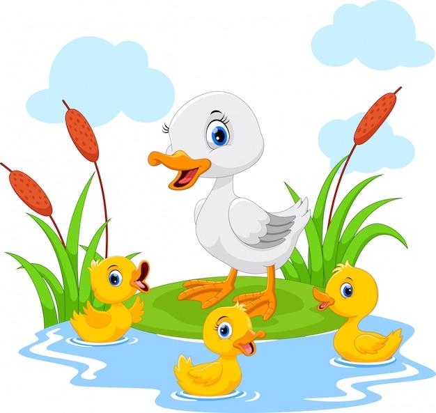Mãe pato nada com seus três patinhos bonitos na lagoa
