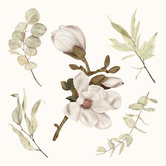 Magnólia boho branca com folhas de eucalipto