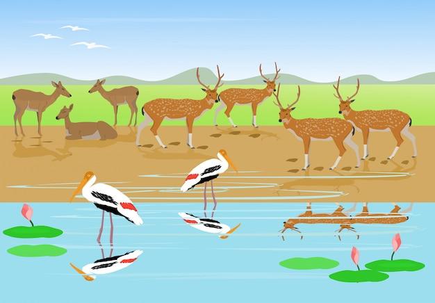 Manadas de veados estão descansando ao longo do fluxo, cegonha pintada estão andando na água