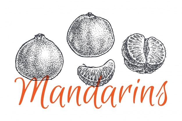 Mandarim e tangerina mão ilustrações desenhadas