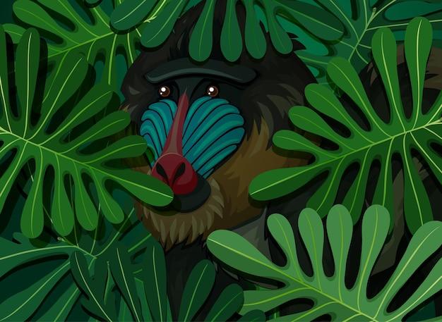 Mandril escondido no fundo de folhas tropicais