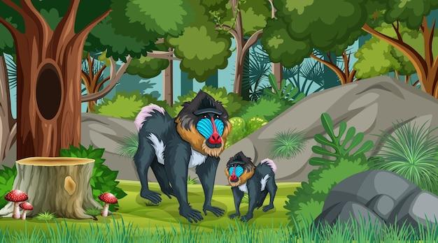 Mandril mãe e bebê na floresta em cena diurna com muitas árvores