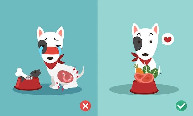 Maneiras certas e erradas para alimentar cães, ilustração