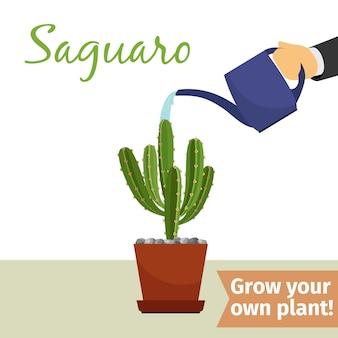 Mão, aguando, saguaro, planta