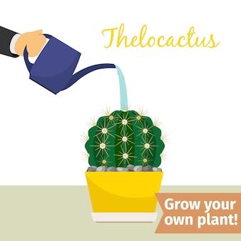 Mão, aguando, thelocactus, planta