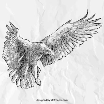 Mão águia desenhada