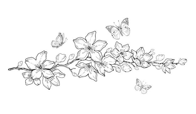 Mão botânica em flor de cerejeira desenhar ilustração de doodle