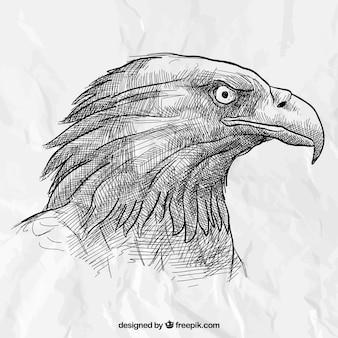 Mão cabeça da águia desenhada