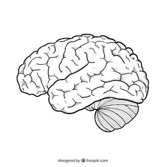 Mão cérebro desenhada