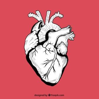 Mão coração humano desenhada