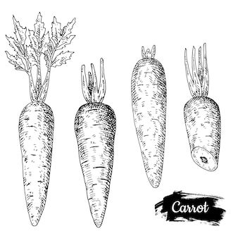 Mão de cenouras desenhada.