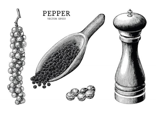 Mão de coleção de pimenta desenhar vintage isolado no fundo branco