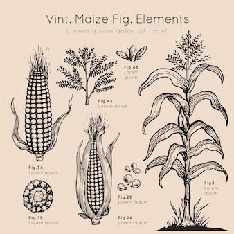 Mão de elementos de milho vint desenhada
