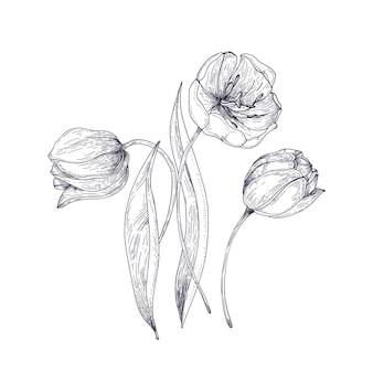 Mão de flores de tulipa linda desenhada com linhas de contorno em fundo branco.