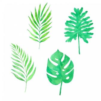Mão de folha verde pained na coleção aquarela