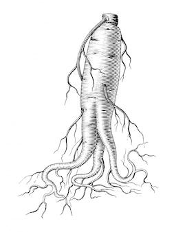 Mão de ginseng, desenho preto e branco estilo vintage clip-art isolado