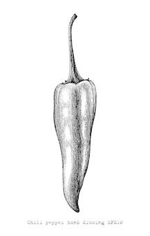 Mão de pimentão peper desenho estilo de gravura, clip-art vintage de pimentão peper