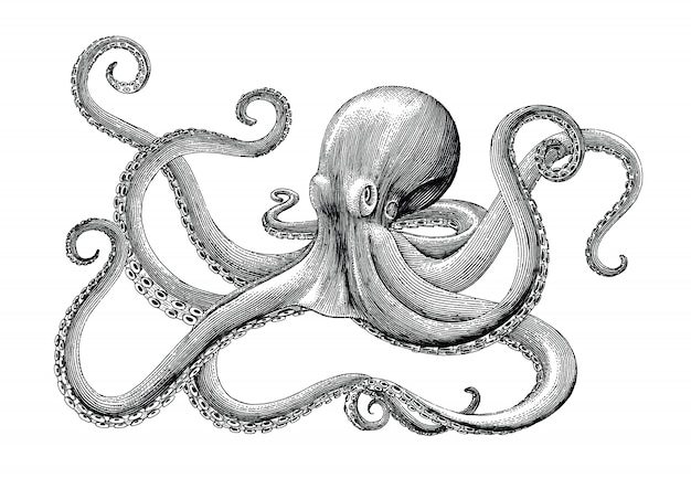 Mão de polvo desenho ilustração gravura vintage em branco backgroud