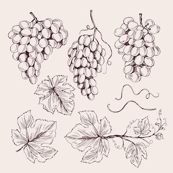 Mão de uva desenhada. folhas de videira e ramo gavinhas vintage vinha esboço coleção