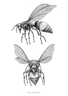 Mão de vespa desenhar vintage isolado no fundo branco