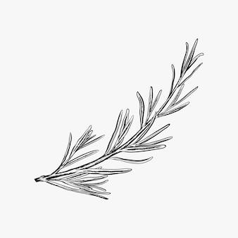 Mão desenhada alecrim vector ilustração-alecrim logotipo design inspiração