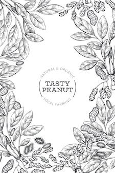 Mão desenhada amendoim ramo e grãos modelo de design. ilustração em vetor alimentos orgânicos em fundo branco.