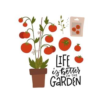 Mão desenhada arbusto de tomate na panela com sementes lettering estilo citação, a vida é melhor no jardim