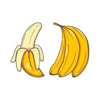 Mão desenhada bananas no fundo branco.