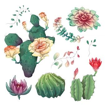 Mão desenhada cactos coloridos e conjunto suculento.