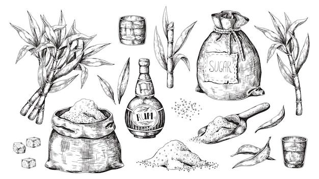 Mão desenhada cana e rum. garrafa de licor vintage e copos, saco de açúcar e cubos, plantas orgânicas de açúcar. bebida alcoólica gravada.