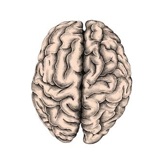 Mão desenhada cérebro humano